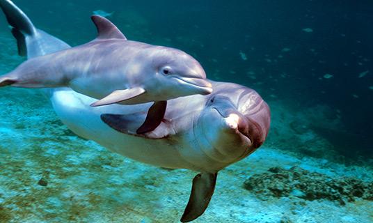 Hawaiian Dolphins & Baby